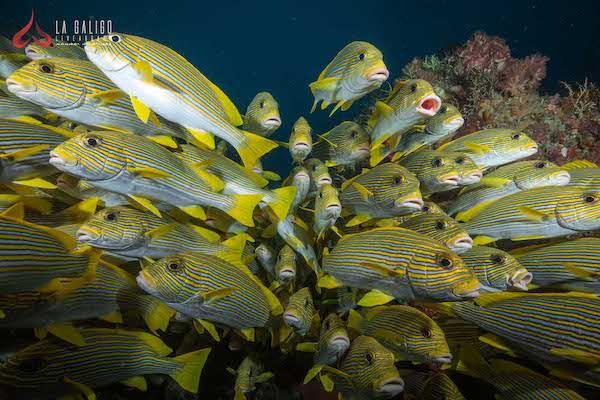 La Galigo's 8-Day Raja Ampat North - Day Seven - Underwater