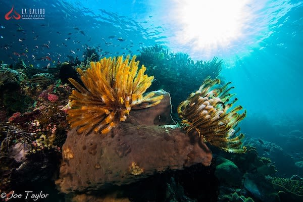La Galigo's 9-Day Raja Ampat South - Day Five - Underwater