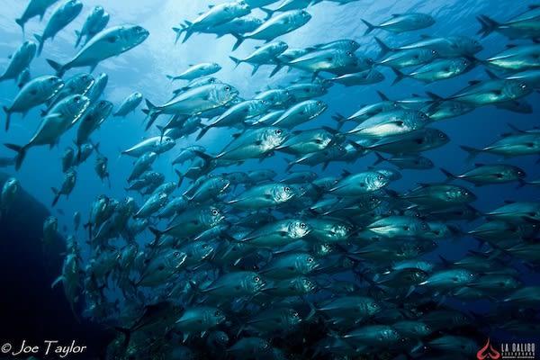 La Galigo's 9-Day Raja Ampat South - Day Six - Underwater