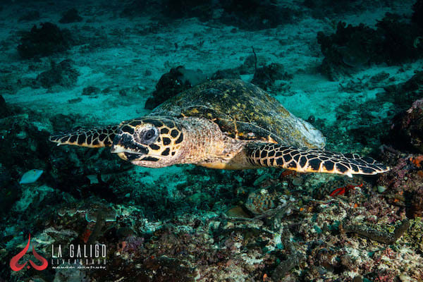 La Galigo's 12-Day Ultimate Raja Ampat - Day Six - Turtle City