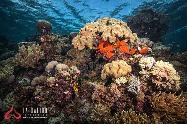 La Galigo's 12-Day Ultimate Raja Ampat - Day Seven - Underwater Corals