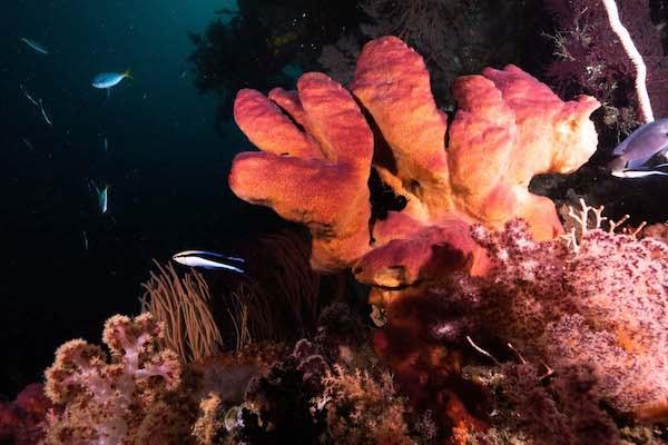 La Galigo's 12-Day Ultimate Raja Ampat - Day Eight - Underwater