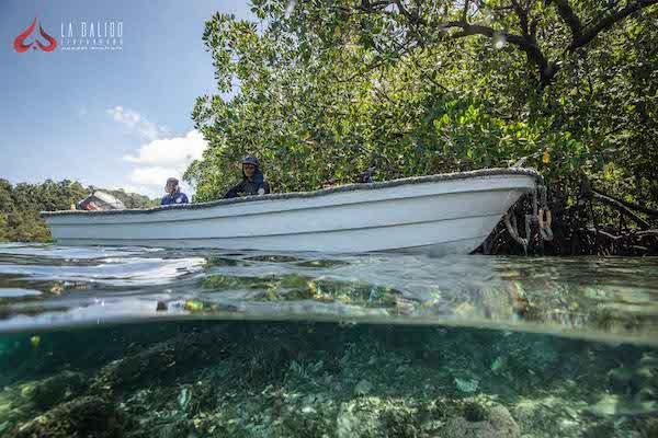 La Galigo's 12-Day Ultimate Raja Ampat - Day Twelve - Tender Waiting for Divers