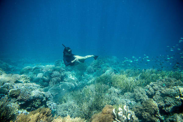 Dunia Baru's 7-Day Bali to Komodo - Day Seven - Guest Enjoy Freediving