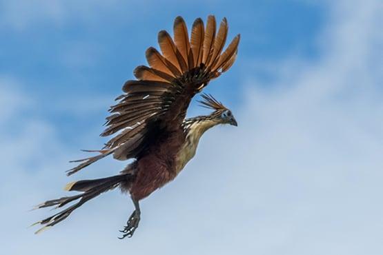 Amazon Dream's 6-Day Tapajos Cruise Itinerary Day One - Bird Life.