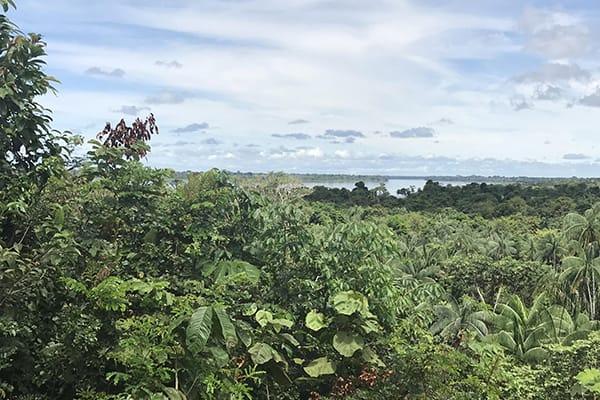 Amazon Dream's 10-Day Amazon & Tapajos Rivers Cruise Itinerary Day Seven - Giant Trees of the Amazon.