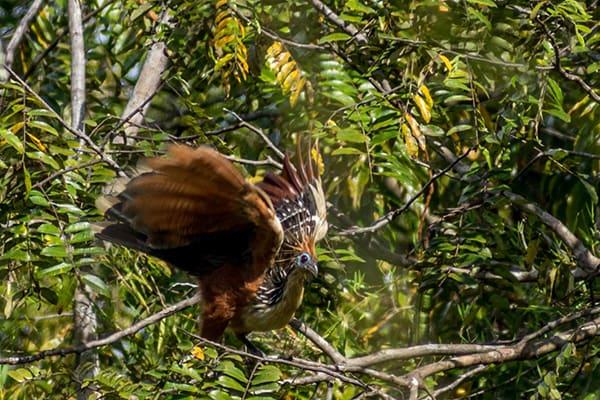 Amazon Dream's 10-Day Manaus Cruise Itinerary Day Four - Bird life.