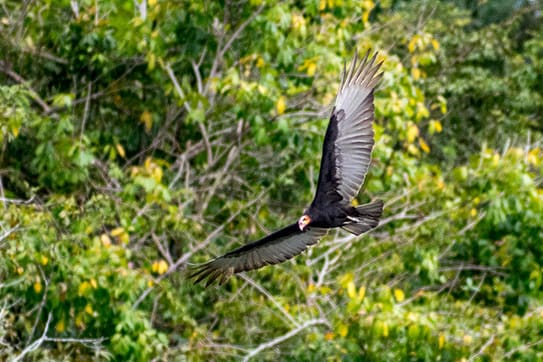 Amazon Dream's 10-Day Manaus Cruise Itinerary Day Six - Bird flying.