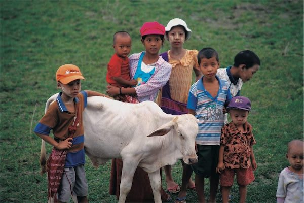 Paukan Princess' 8-Day New Upper Irrawaddy - Day Six - Kids Playing with their Cow in the Field