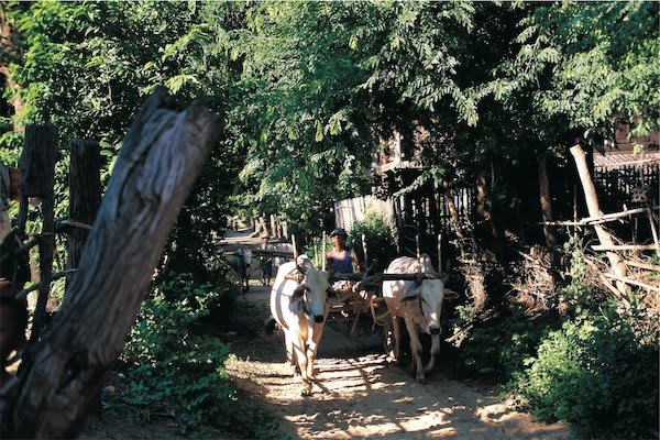 Paukan Princess' 11-Day Burmese Days Upriver - Day Seven - Ox Cart in a Village