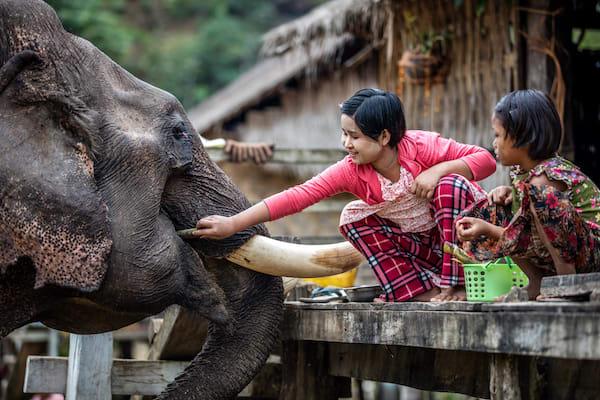 Kha Byoo Pandaw's Upper Irrawaddy: Mandalay to Bagan - Day Eleven - Local Children Feeding Elephant
