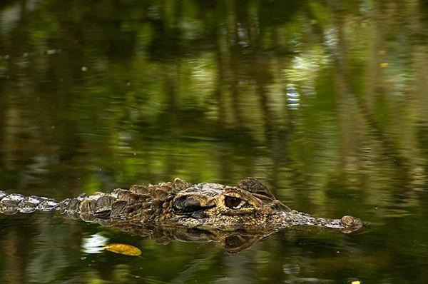 Reina de Enin's 4-Day Itinerary Day One - Caiman Swimming.