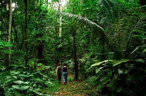 Reina de Enin's 4-Day Itinerary Day Three - Jungle Walk.