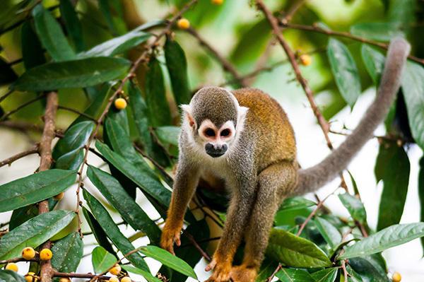 La Selva Amazon Ecolodge & Spa 5-Day Lodge Program Day Four -  Monkey Sighting.