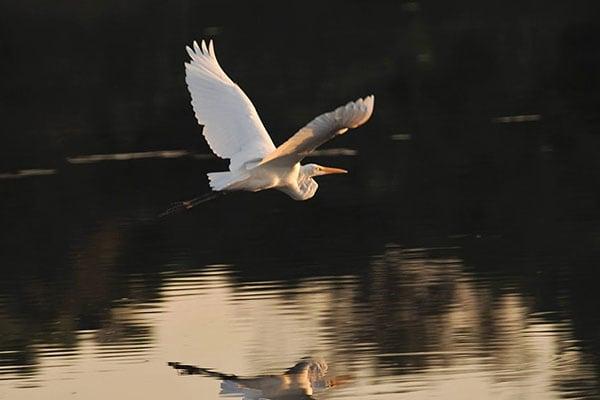 Peralta's 5-Day Victoria Regina Itinerary Day Four - Bird Life.