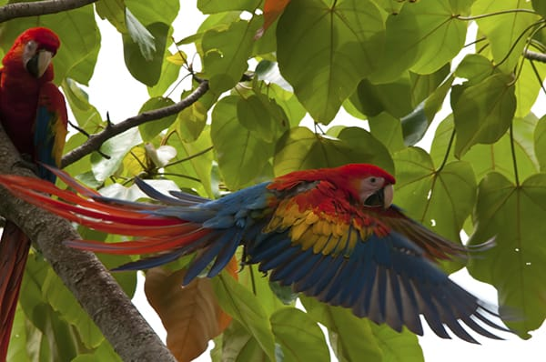 Treehouse Lodge's 3-Day Itinerary Day Two - Macaw Sighting.