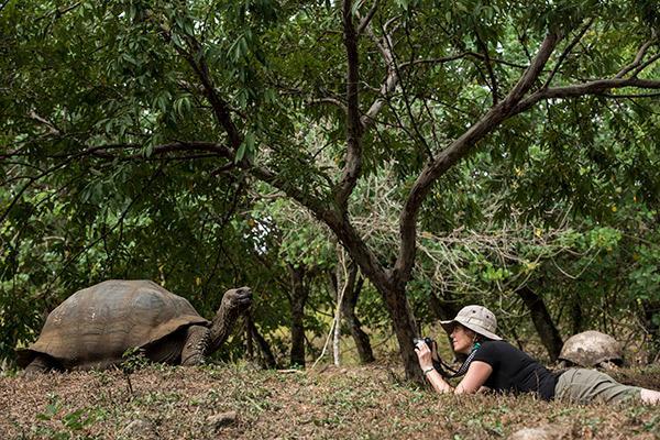 Galapagos Safari Camp's Classic Safari Day One - Tortoise Sighting.