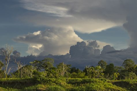 Treehouse Lodge's 4-Day Itinerary Day Four - Amazon Rainforest Landscape.