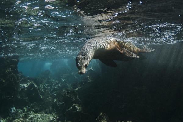 Coral I & II's 8-Day Cruise 'B+C' Itinerary Day Six - Sea Lion Sighting.