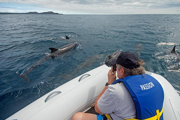 Passion's 8-Day Western and Central Itinerary Day Three - Dolphin Sighting.