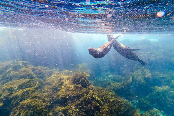 Passion's 8-Day Eastern and Central Itinerary Day Seven - Snorkelling with Sea Lions.