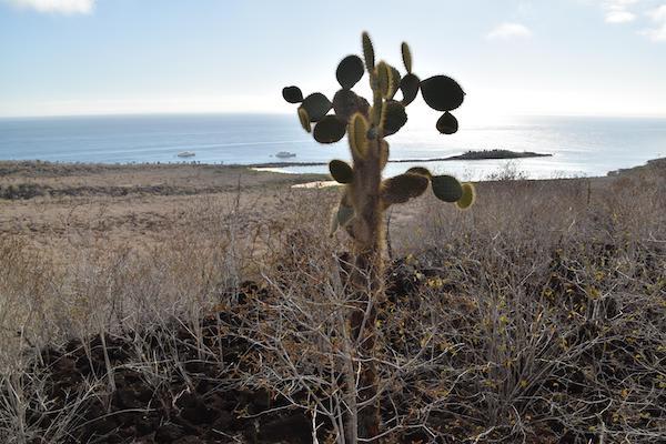 Ocean Spray's 6-Day Itinerary 'B' Day One - Santa Fe Island.