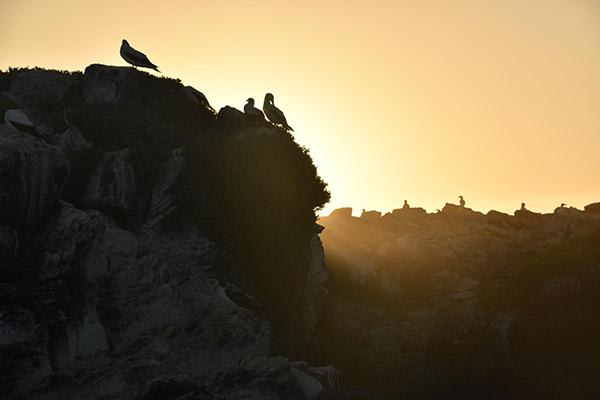 Ocean Spray's 8-Day Itinerary 'A' Day Seven - Española Island Sunset.