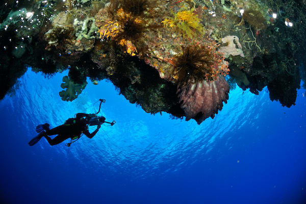 Rascal's 12-Day Spice Islands Crossing Ambon to Raja Ampat - Day 1 - Diving