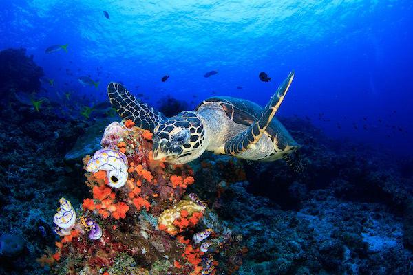 Rascal's 6-Day Raja Ampat - Day 2 - Turtle