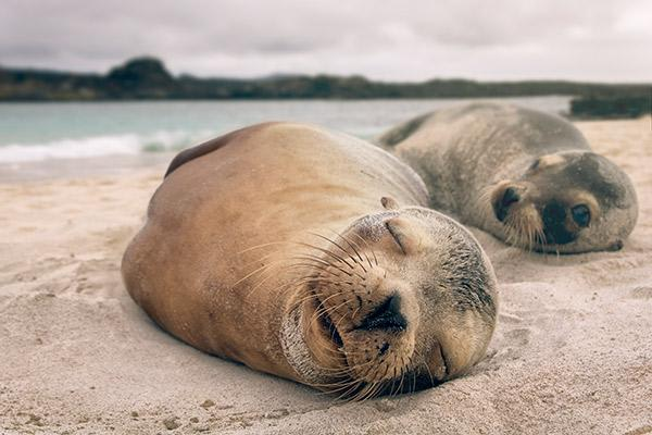 Nemo III's 5-Day Southern Islands Itinerary Day Two - Sea Lions Napping on the Beach.