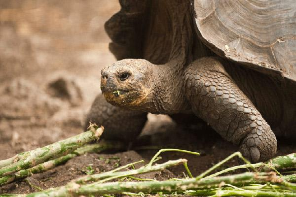 Nemo III's 8-Day Southern Islands Itinerary Day Five - Giant Tortoise Up Close.