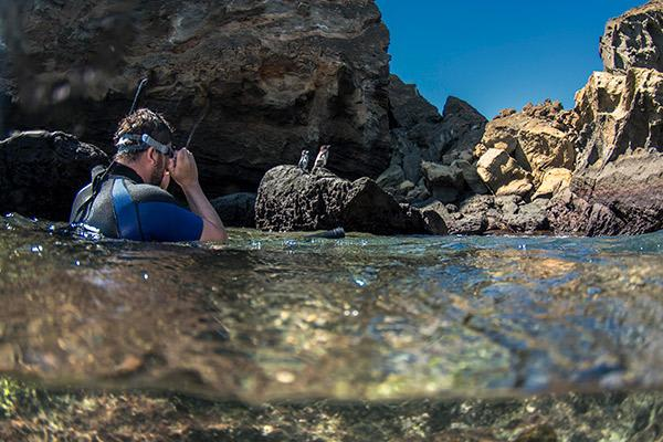 Seaman Journey's 8-Day C Itinerary Day Four - Snorkelling with Galapagos Penguins.