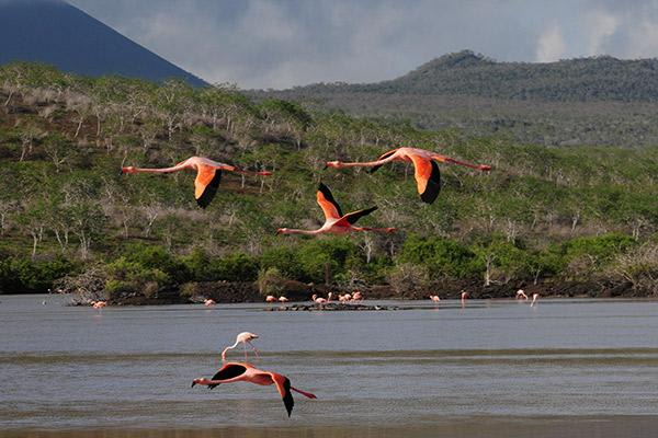 Seaman Journey's 8-Day C Itinerary Day Five - Flamingos Flying.