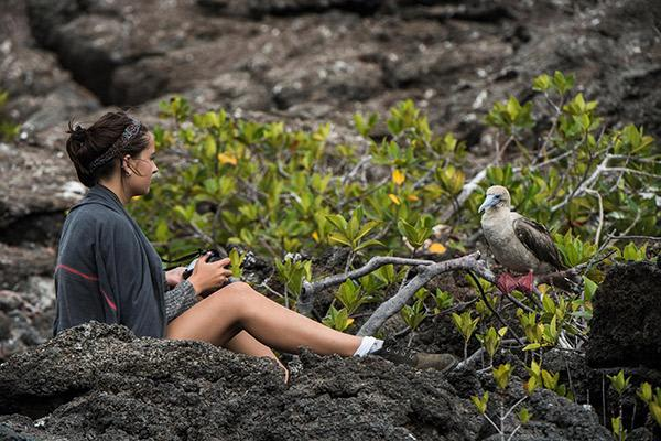 Seaman Journey's 8-Day C1 Itinerary Day Two -  Red-Footed Booby at Genovesa Island.