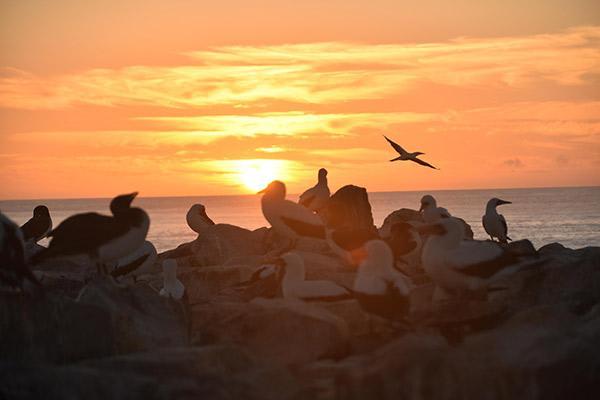 Seaman Journey's 8-Day C1 Itinerary Day Six - Española Island at Sunset.