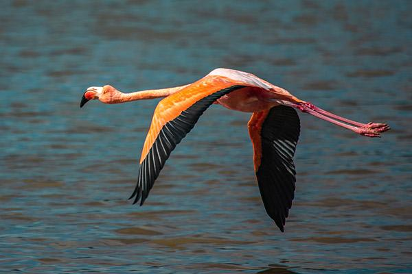 Seaman Journey's 8-Day C1 Itinerary Day Seven - Flamingo Flying.