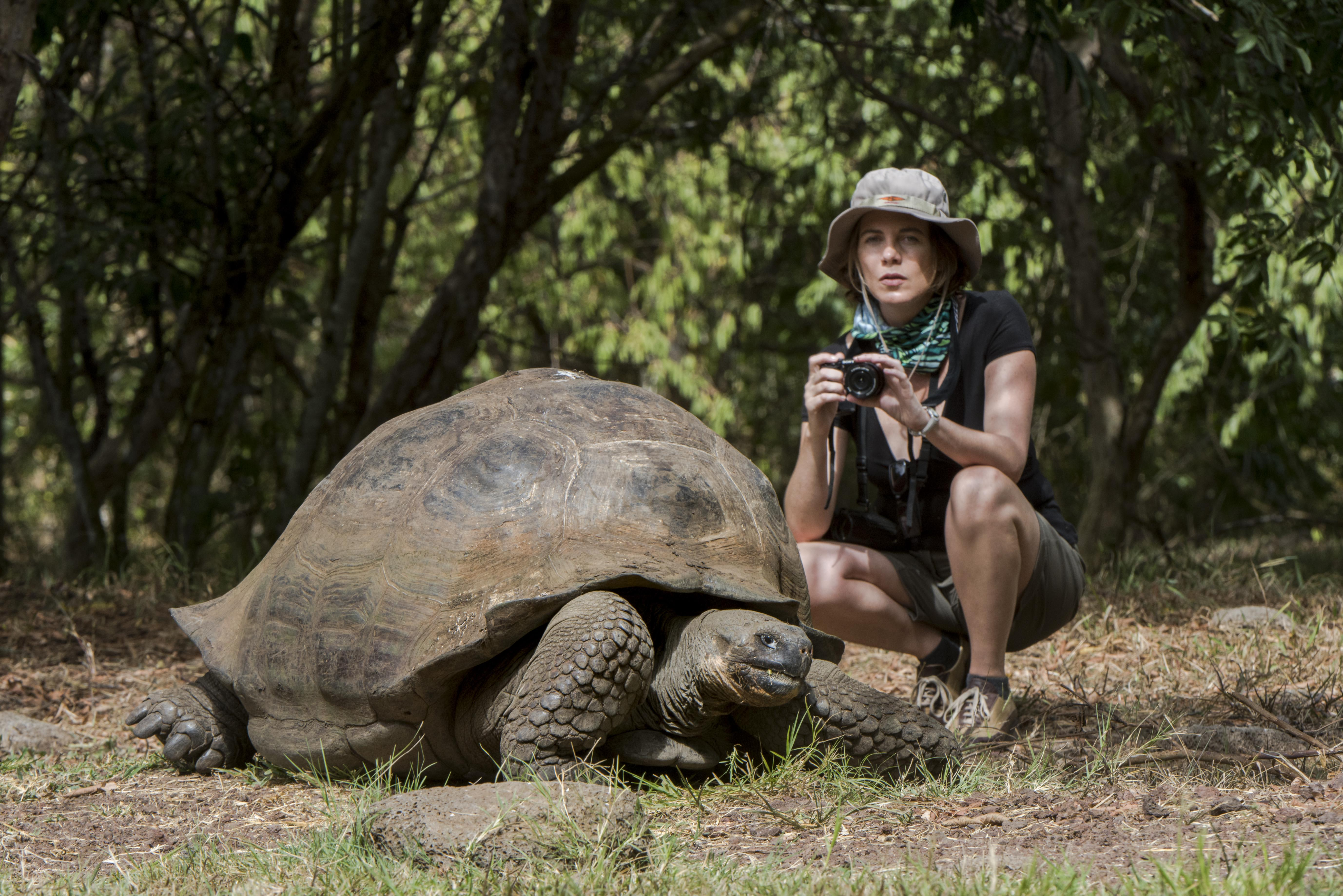 Seaman Journey's 8-Day C1 Itinerary Day Eight - Galapagos Tortoise.