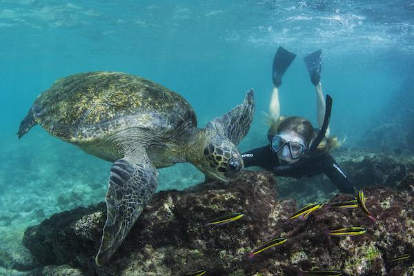 Seaman Journey's 11-Day Itinerary Day Seven - Galapagos Sea Turtle.