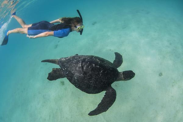 Seaman Journey's 15-Day F Itinerary Day Seven - Snorkelling with a Galapagos Sea Turtle.
