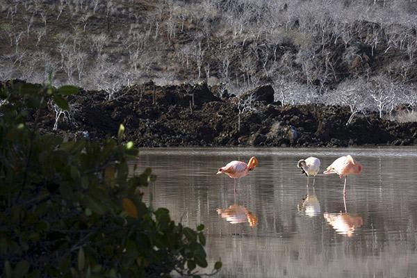 Solaris' 5-Day Itinerary Day Three - Punta Cormorant.
