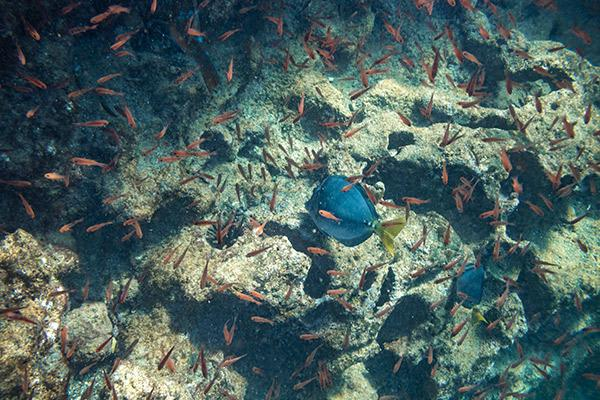 Solaris' 5-Day Itinerary Day Five - Fish in the Galapagos.