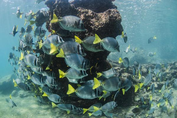 Solaris' 8-Day B Itinerary Day Eight - Fish in the Galapagos.