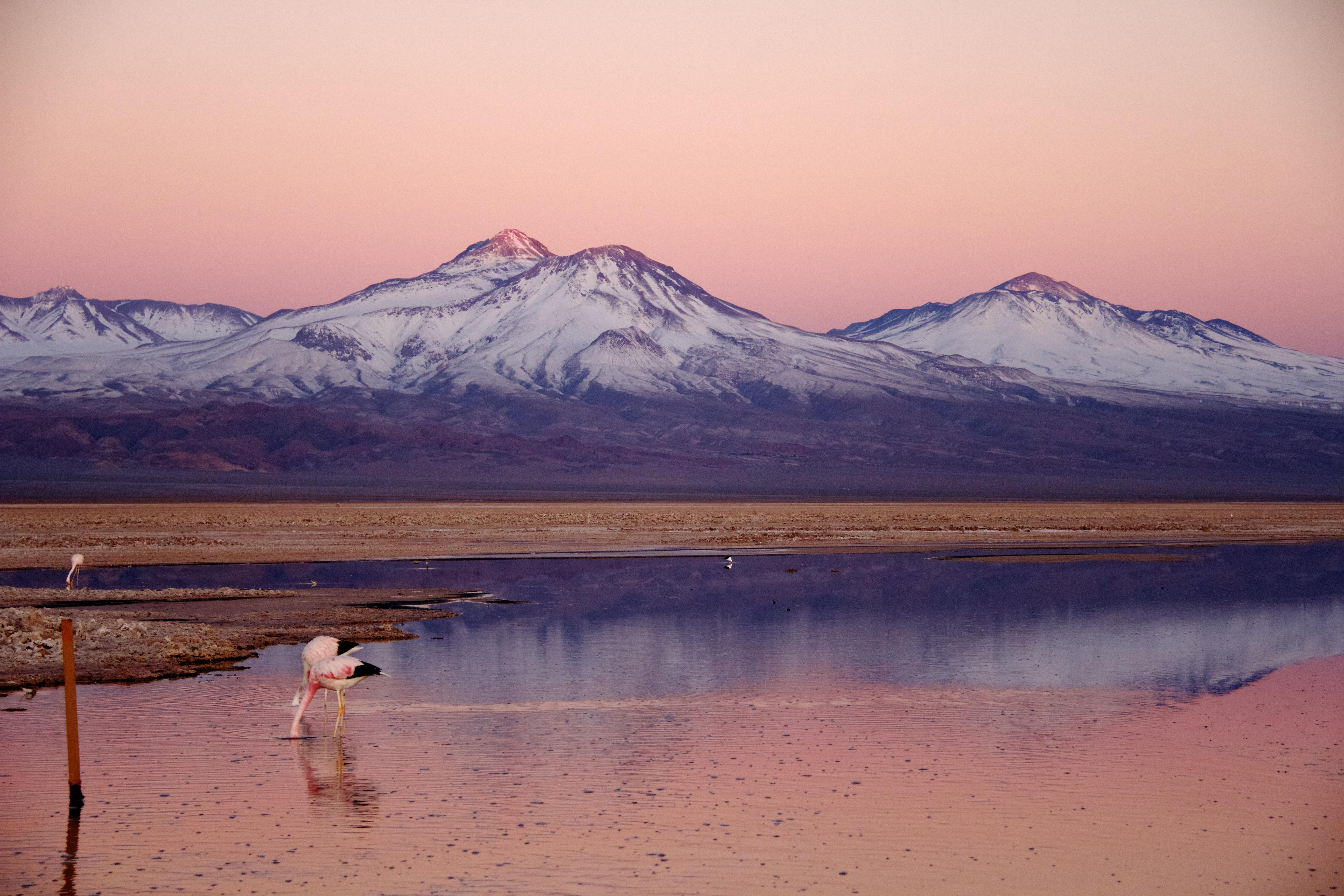 Tierra Atacama's 6-Day All Inclusive Program Day Three - Vicuna Sighting.