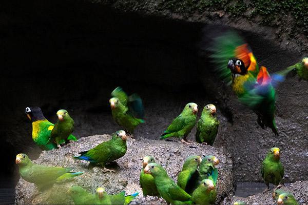 Manatee Amazon's 4-Day Itinerary Day Three - Parrot Clay Lick.