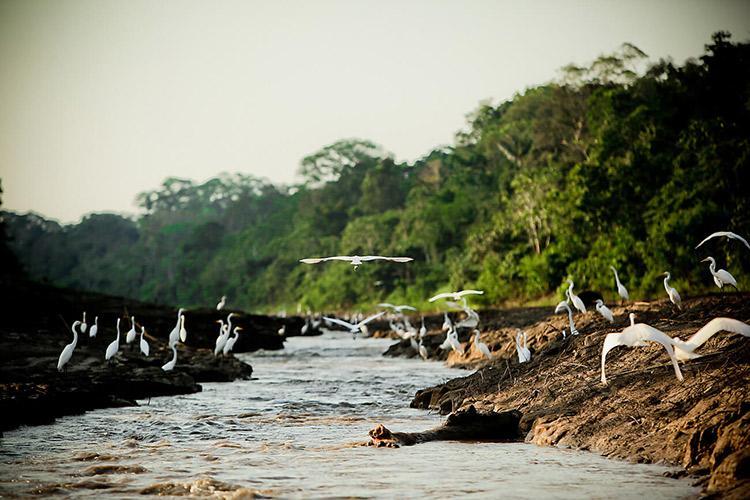 Delfin II Amazon's 4-Day Itinerary Day One - Bird Watching.