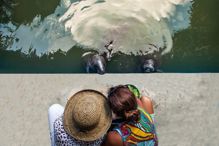 Delfin II Amazon's 4-Day Itinerary Day Four - Manatee Rescue & Rehabilitation Center.