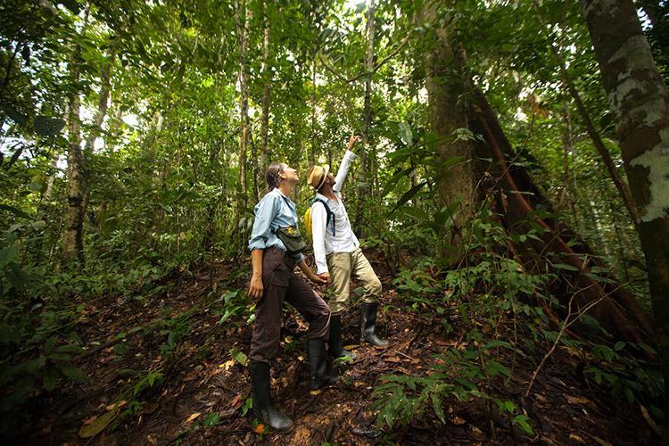 Delfin II Amazon's 5-Day Itinerary Day Three - Jungle Walk Excursion.