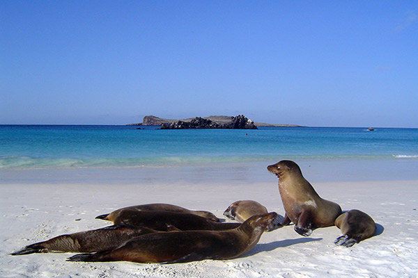 La Pinta's 5-Day Eastern Itinerary Day Two - Galapagos Sea Lions Sighting.