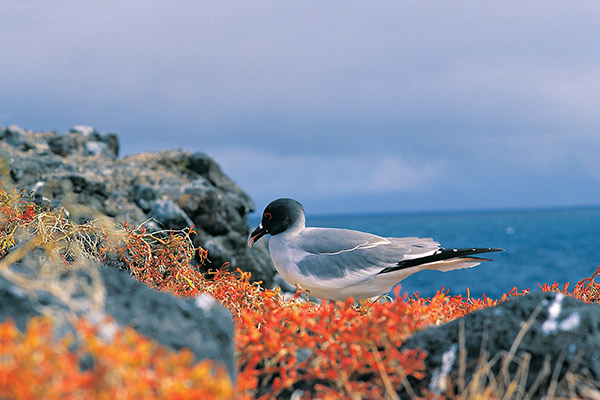 La Pinta's 5-Day Eastern Itinerary Day Four - Endemic Galapagos Bird Sighting.