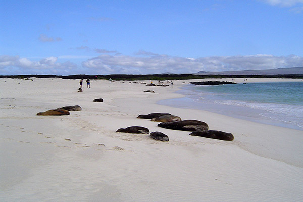 Isabela II's 5-Day Western Itinerary Day Two - White Sandy Beaches in the Galapagos.